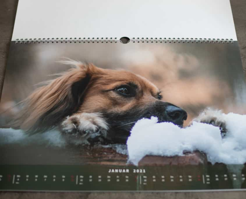 Monatsbild Januar